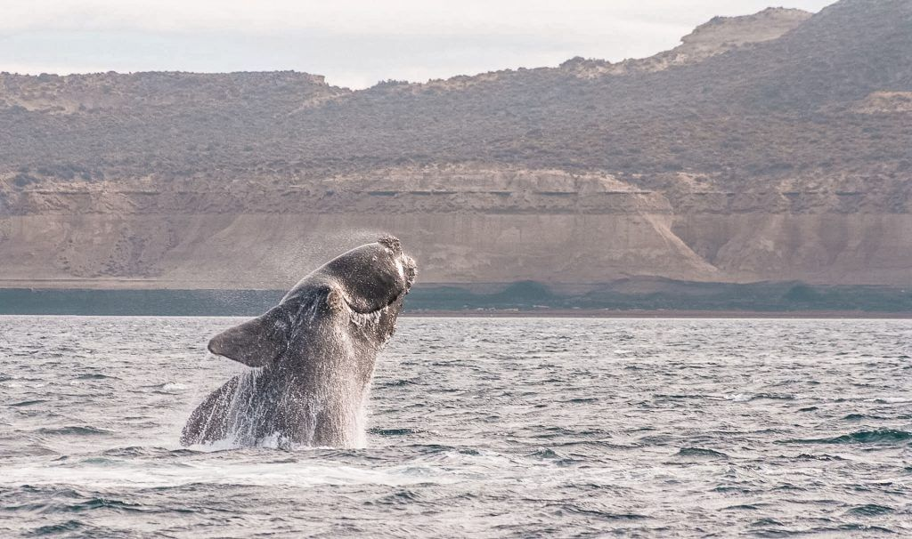 Things to do in Puerto Madryn: Whale Watching